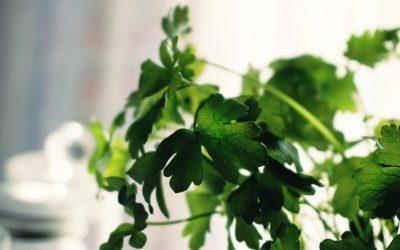 This Simple Ingredient Can Help Combat Seasonal Allergies